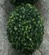 Buxkugel 20cm
