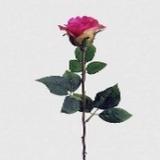 Rose geschlossen x 1, pink, H65cm