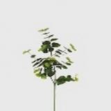 Eucalyptus, weiss-grün, H90cm