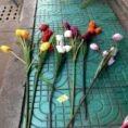 Tulpe lang